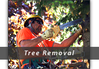 Tree Removal Graphic